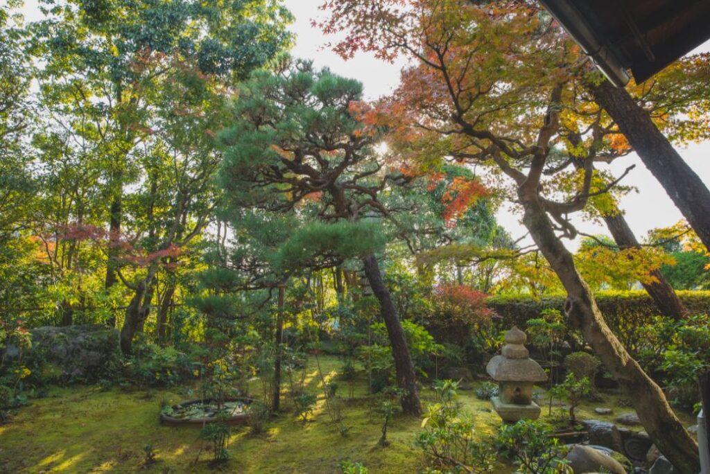 Pflanzkübel Raumteiler können einen Garten strukturieren